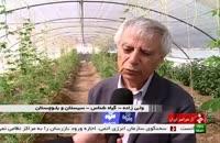 گیاهان دارویی در سیستان و بلوچستان