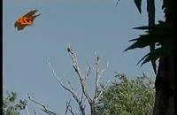 گونه هاي جانوري: پرنده دلیجه