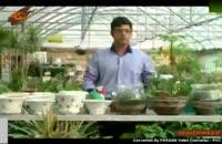 نگه داری و پرورش گیاهان آپارتمانی