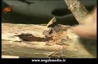 آفت کرم خراط برای درختان میوه