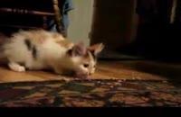 گربه ی گرسنه !!!