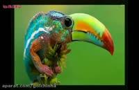 تصاویر فتوشاپ شده از حیوانات