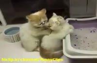 ماساژ دادن گربه ها !!!