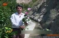 گونه هاي گياهي: خواص گل ختمی