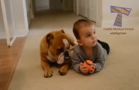 همبازی شدن سگ ها با نوزادان