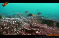 حیات دریایی مرجان ها