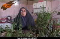 کلیپ آشنایی با کارافرینان : زهرا امیر پری