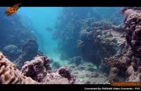 مرجان ها،موجودات آسیب پذیر