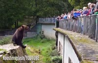 غذا خوردن خرس تنبل در باغ وحش