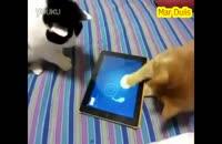 گربه های شیطون دنبال ماهی تو آی پد