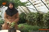 کلیپ گیاه شناسی : گیاه پاپیتال