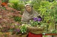 گیاه لیزانتوس