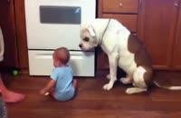 غذا دادن کودک به سگ