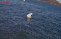 حمله مرگبار کوسه سفید شکار فک