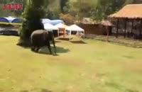 فیل مهربان از صاحبش دفاع می کند.