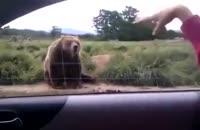 عکس العمل مودبانه و جالب خرس