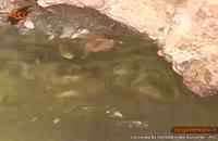 چشمه قل قل در  شهرستان دامغان