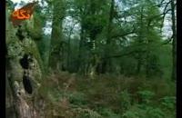 صنايع دستي:  چوب تراشی