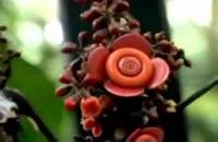 گیاهانی که چشم دارند