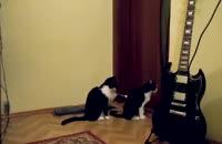 عذرخواهی عجیب یک گربه!