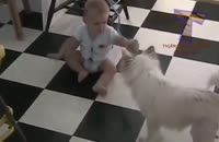 بازی بامزه ی سگ و نوزاد