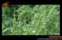 گونه هاي گياهي: درختان دارویی