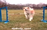 سگ زرنگ به این میگنا!!!!