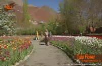 گونه هاي گياهي: گل لاله(انگلیسی)