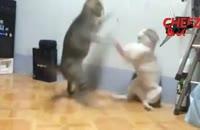کلیپ های برتر -  دعوای باحال 2 گربه