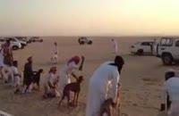 مسابقه ماشین و سگ