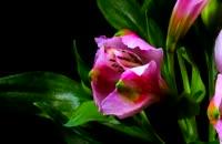 لحظه باز شدن گل ها - واقعا زیباست