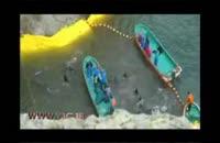 شکار دلفین در ژاپن