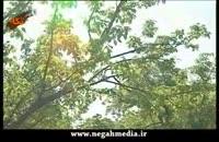 پوسیدگی ریشه درختان میوه