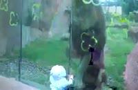 ماجرای جالب شیر و کودک