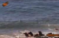 نهنگ قاتل جانداری شرور