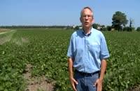 تشخیص خسارت نماتد در یک مزرعه ( Bob Mulrooney )