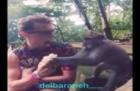 آقا پیش میمون چرا موز میخوری ؟!