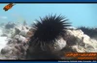 گونه هاي جانوري: طوطیای دریایی