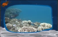 گونه هاي جانوري: مرجان دریایی