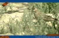 گونه هاي جانوري: چکاوک کاکلی