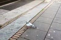 ملاقات با کبوتری که به زمین و جاذبه اش میخندید