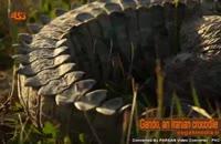 گاندو (انگلیسی)  تمساح پوزهکوتاه