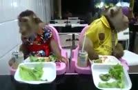 ویدئو جالب از غذا خوردن دوتا میمون