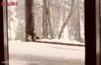 بچه ها در یک روز برفی
