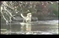 سگ ماهی گیر !!!