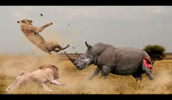 کدام حیوانات وحشی هستند