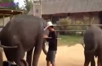 رقص فیل بامزه  جالب و خنده دار طنز