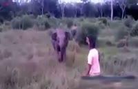 روش موثر برای متوقف کردن حمله فیل