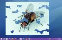 مگس ها در رایانه ی شما !!!