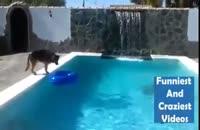 نجات جالب یک مرد از غرق شدن توسط سگش